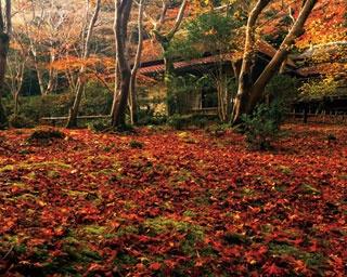散りモミジでおおわれた苔庭の背後に、草庵がひっそりと立つ祇王寺の光景は別世界のよう/祇王寺