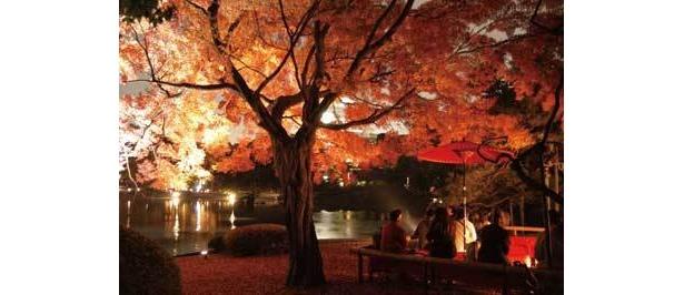 夜空に浮かびあがる「六義園」のイルミ紅葉