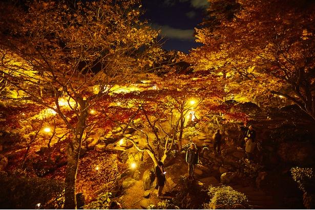 紅葉が最盛期を迎えた「徳明園」