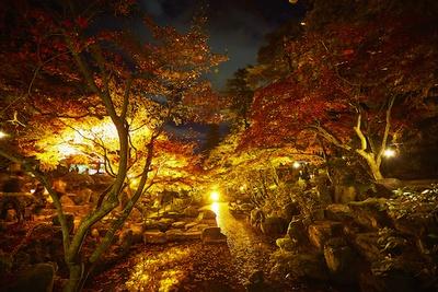 【写真一覧】紅葉のグラデーションが幻想的!「黄金のライトアップ」