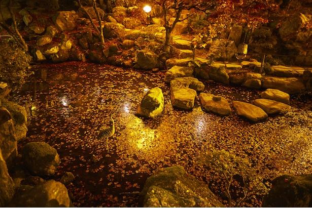 池に浮かぶ紅葉のじゅうたん