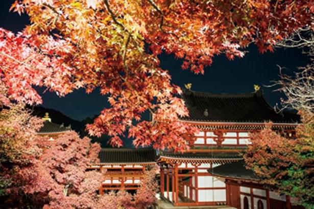 紅葉と鳳凰堂の赤色が闇に映える/平等院 夜間特別拝観「瑞光照歓~錦秋のあかり~」