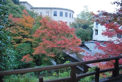 和洋折衷の風雅な空間が、鮮やかな紅葉のコントラストで彩られる/ノートルダム女学院中学高等学校 和中庵