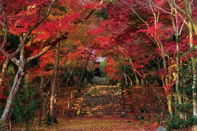 参道の石段を染める紅葉のトンネルが美しい/浄住寺