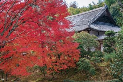 池泉式庭園や狩野永岳筆の衝立「雲龍図」などが見どころ/浄住寺