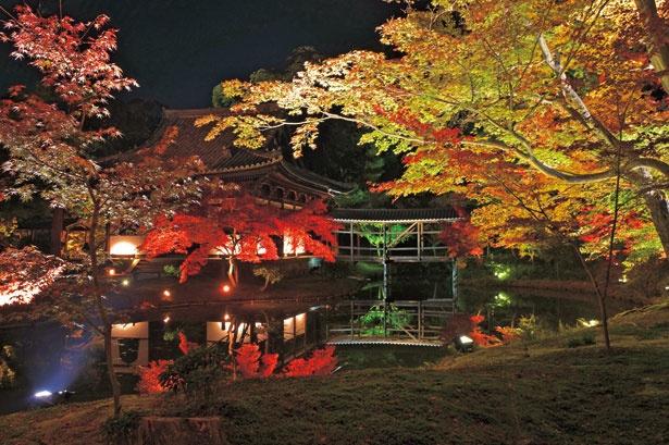 鏡のような水面に紅葉が映り込む臥龍池や北政所が眠る霊屋など見どころが満載/高台寺