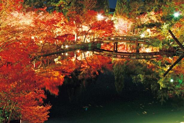 多宝塔や庭園がライトアップされ、特に放生池に映し出される幻想的な光景は見事/総本山永観堂 禅林寺