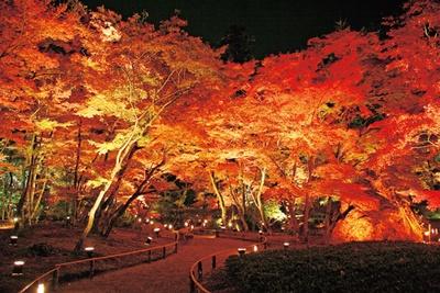 回遊式山水庭園「獅子吼の庭」を約700基の照明で照らし、昼間とは異なる静寂であでやかなモミジが楽しめる/天龍寺塔頭宝厳院