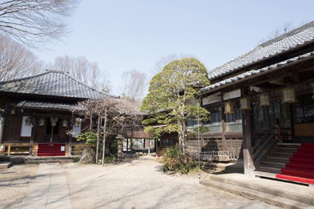 観音寺の鐘楼には大きな白象の姿が。昭和40年代に置かれ、飯能が舞台のアニメ「ヤマノススメ」にも登場した
