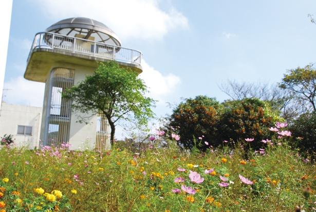 「大楠平」と呼ばれる場所にある雨量観測所。裏手に花畑が広がり、春は菜の花が、秋はコスモスが一面に咲き誇る