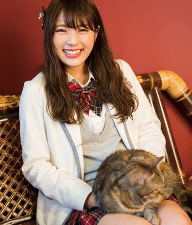 【写真を見る】なぎちゃんの推しニャン「カーリーちゃん」(アメリカンショートヘア)/猫cafe ぐるぐる堂