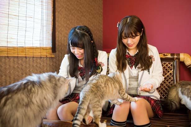 一部の猫を除いて、おやつもあげられる/猫cafe ぐるぐる堂