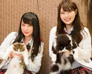 モフモフかわいい猫と一緒/猫cafe ぐるぐる堂