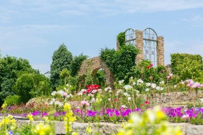 「海の中道海浜公園」。インスタ映えも狙えるたくさんの美しい花