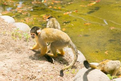 「海の中道海浜公園」。子供にも大人気の動物と触れ合える「動物の森」