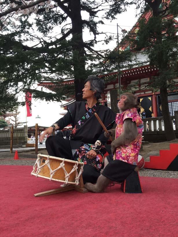 かわいいお猿さんのショーも開催/大阪城イルミナージュ