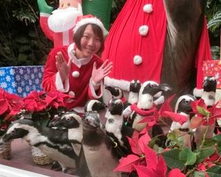 クリスマス仕様になった「伊勢夫婦岩ふれあい水族館」。キュートな動物たちにメロメロ!