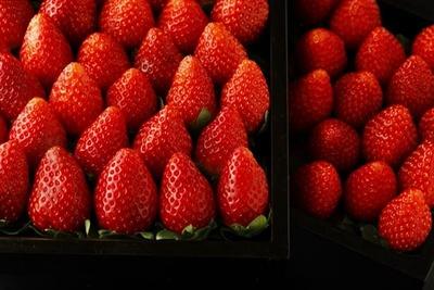 【写真を見る】一押しのフレッシュいちごバーで、ブランドいちごを食べ比べ!