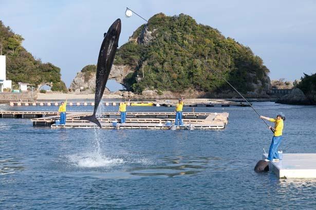 【写真を見る】大迫力のクジラショー/太地町立 くじらの博物館