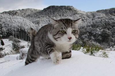 鹿児島県・伊作峠。雪が降ってもパトロールは欠かせない