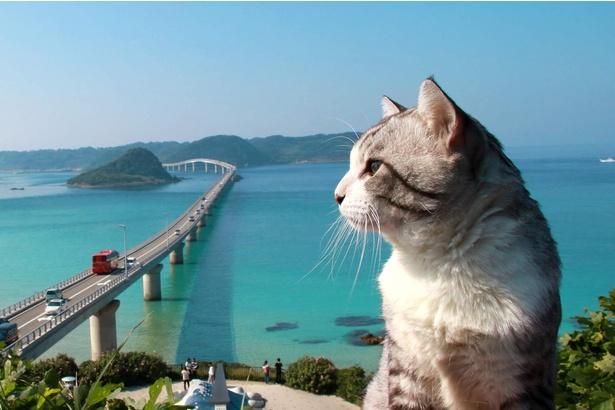 山口県・角島大橋の絶景