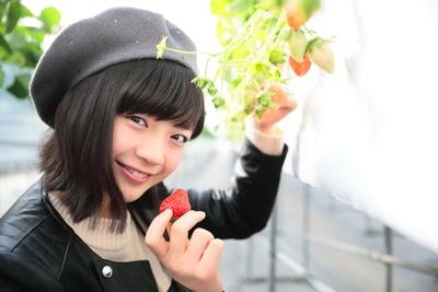 「イチゴ好きだからいくつでも食べられそう」