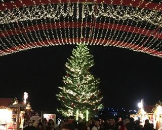 クリスマスマーケットは「横浜赤レンガ倉庫」の人気イベント。クリスマスカラーを基調としたイルミのツリーが登場