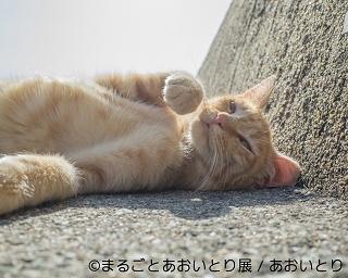 """""""鼻提灯猫""""などで人気の写真家「あおいとり」が最後の個展を開催!"""