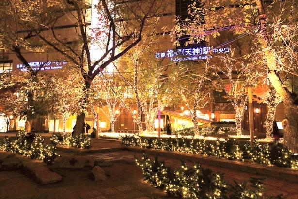 園内の街路樹も美しくライトアップ