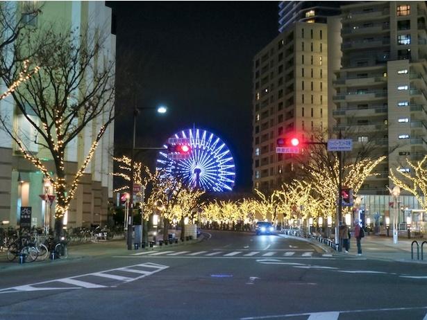 【写真を見る】umie周辺の街路樹もイルミネートされているので必見!