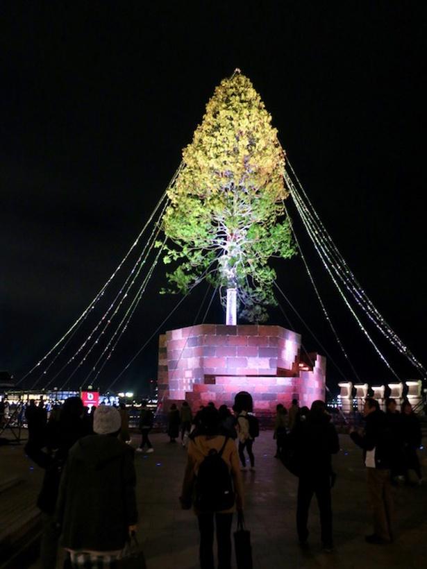 世界一のツリーに到着! 近づくとその巨大さに圧倒される