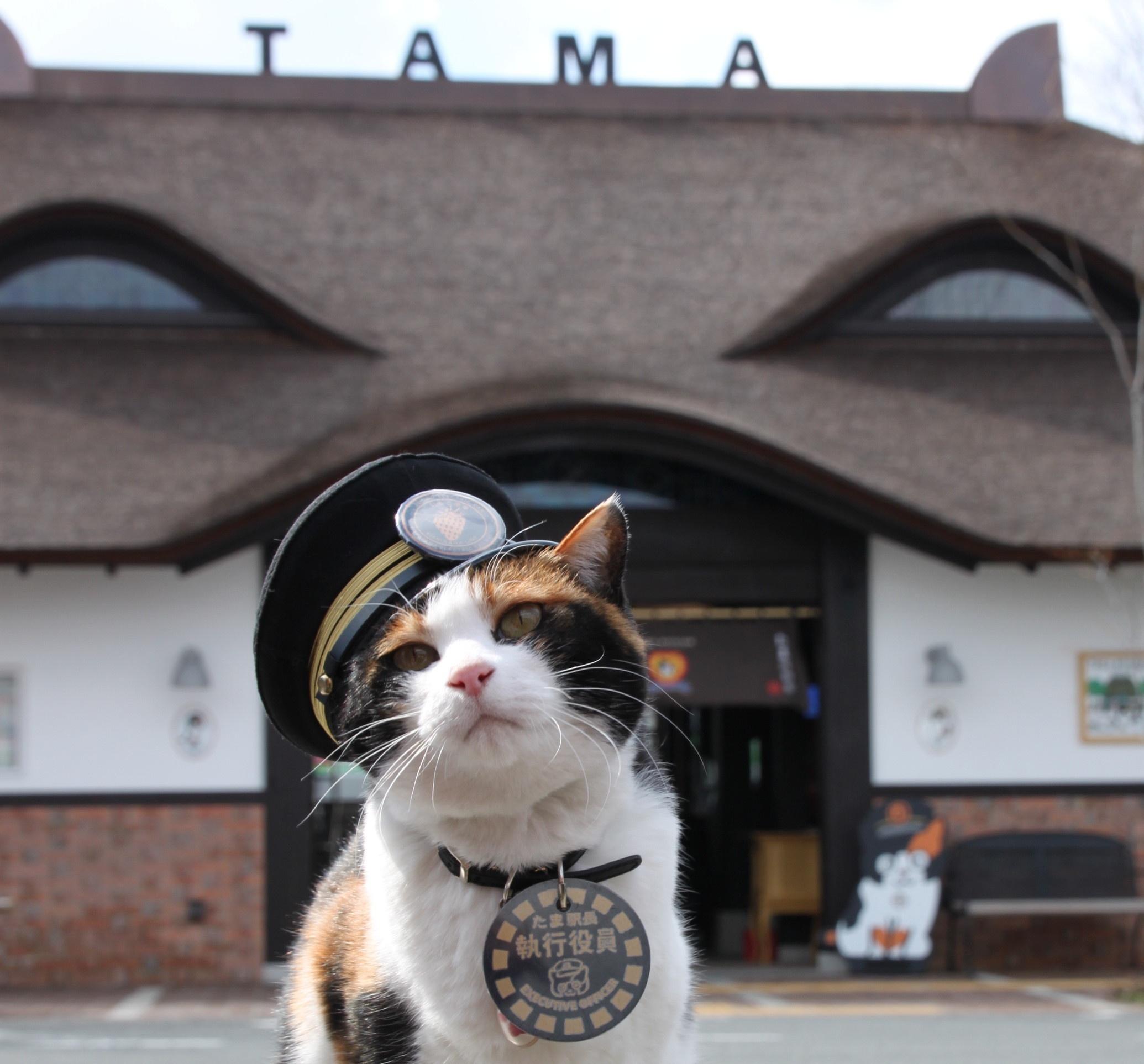 初詣は猫の駅長で有名な和歌山電鐵で三社参り