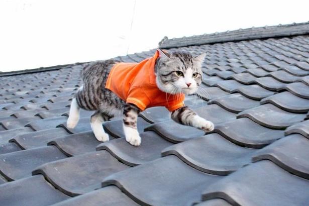 屋根の上だって平気!