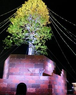 展望台に上り、本物の樹木の木肌に触れよう!