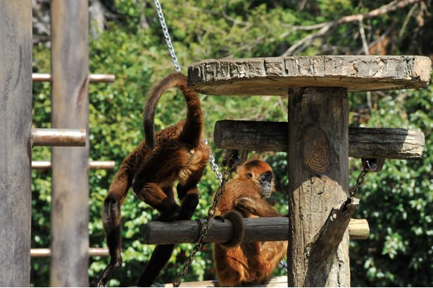 サル、猿、SARU。とにかくサルが多い