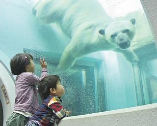 【静岡市VS浜松市】ココでしか見られない動物も!市民から愛される動物園対決