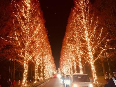 佐井通りの歩道沿いに並んだメタセコイアの木々がイルミネートされる「光のプロムナード」。道幅が狭く木々が密集しているので見応えたっぷり