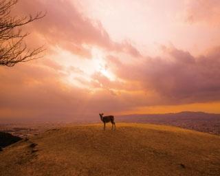 古都の町をあかね色に染める 若草山からの絶景に感動!