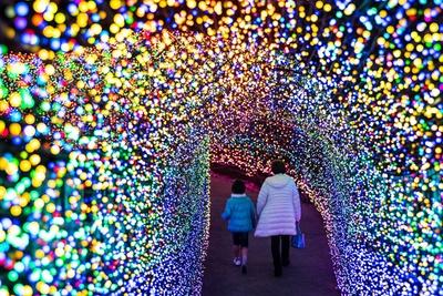 【写真を見る】フォトジェニックな「夢のトンネル」