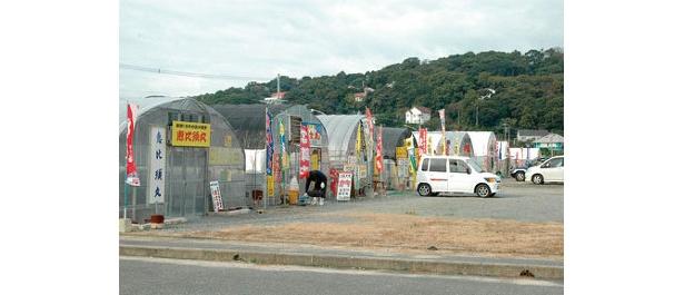 岐志漁港内に10軒、周辺3軒のカキ小屋が並ぶ。駐車場も200台収容と多い