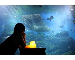 ストイックに水族館を楽しむ「おひとりさまナイト水族館」初開催