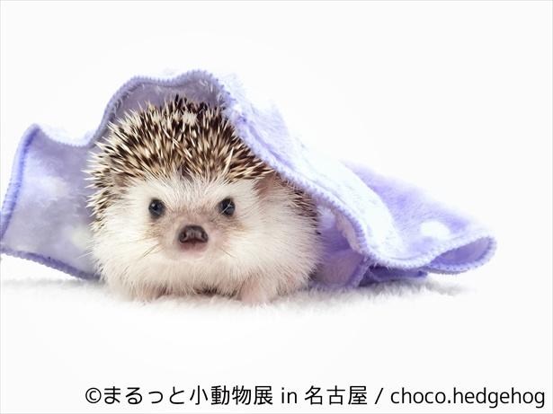 まんまるな小動物たちが名古屋でお出迎え