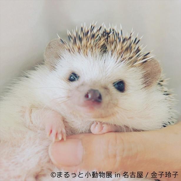 手の平すっぽりサイズの小動物たちに胸キュン!