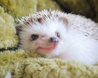今すぐモフりたい!悶絶級にカワイイ「まるっと小動物展」が名古屋で開催