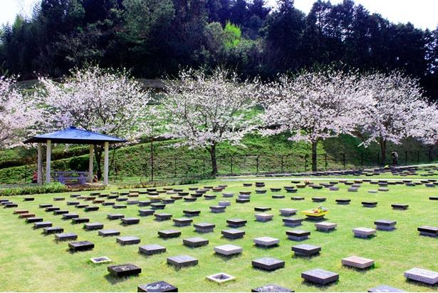 【写真】樹木を墓標にして遺骨を直接大地に埋葬する「樹木葬」