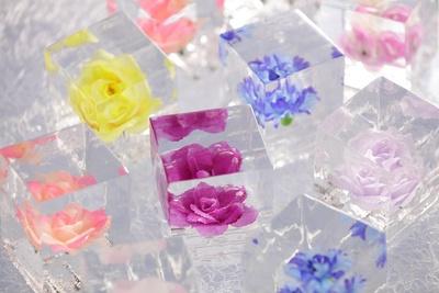氷の壁一面に花が敷き詰められる「氷のフラワーギャラリー」