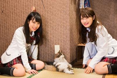 【写真を見る】慣れてるなぎちゃんと初めてのももるん/猫cafe ぐるぐる堂