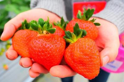 4品種のイチゴがたっぷり60分食べ放題!練乳(1本200円)も販売している