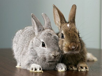 【写真】1位はコチラ!ふわふわで癒し系のウサギ