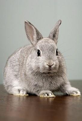 ミニウサギはやんちゃっ子